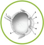 eye diagram labeled game life science worksheets pdf and games for kids label eye diagram quiz
