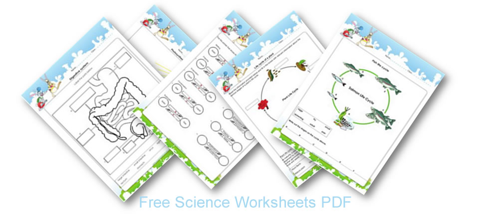 Ecosystem worksheets for 6th graders