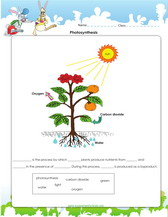 photosynthesis worksheet pdf for kids