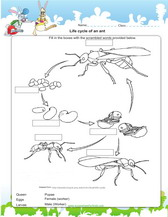 life cycle of an ant worksheet