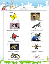 classify vertebrates and invertabrates pdf
