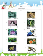 Animal classification worksheet second grade