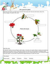 Plant cycle worksheet pdf for kids