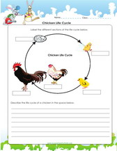 4th grade science worksheets, PDF Printable