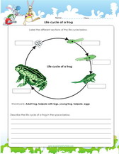 Life Cycle Worksheets For 2Nd Grade Worksheets for all | Download ...