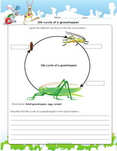 animal cell worksheet 5th, animal cell worksheet biology, plant and animal cell diagram 5th grade, animal cell worksheet high school, animal cell worksheet kindergarten, on 4th grade worksheets on plant and animal cells