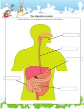 4th grade science worksheets pdf printable digestive system worksheet for 4th grade ibookread