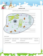 Printables Animal Cell Worksheet plant and animal cells worksheets games quizzes for kids