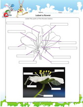 4th grade worksheet on labelling parts of a flower pdf.